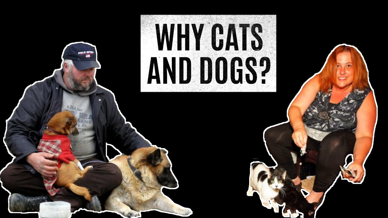 Why Cats and Dogs?