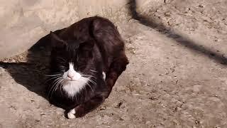 Тайна чёрных котов