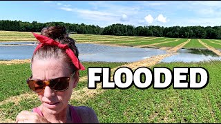 OUR DRY HAY IS FLOODED!  Vlog 335