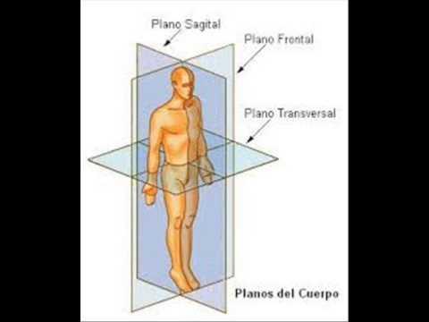 Planos del cuerpo humano youtube for Medidas ergonomicas del cuerpo humano