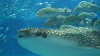 osaka aquarium by dom bower
