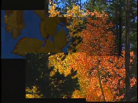 U2 October - Brad Houston KUSA-TV edit feature 3 of 3