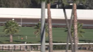 California Chrome Work on TVG for March 13, 2015