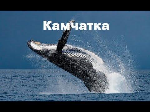 Kamchatka / Неизвестная