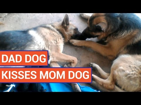 Amazing Dad Dog Takes Care of New Mom Dog 2016 | Daily Heart Beat