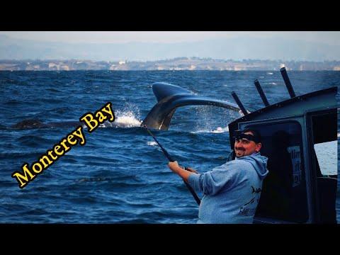 Monster Rockfish And Lingcod Fishing Monterey Bay
