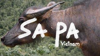 Hiking the Rice Paddies of Vietnam | SA PA VIETNAM - Vlog 143