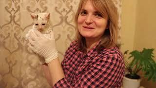 Лечим уличных котят от лишая. Кошка будет уезжать в Киев.