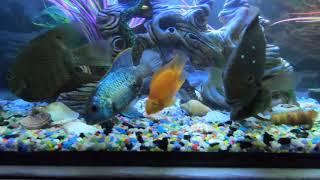 видео Небольшие аквариумы