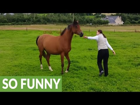 Extremely happy horse plays with dogs in field