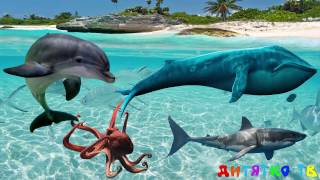 Угадай обитателей подводного мира для самых маленьких Подводный мир Развивающие мультики для детей