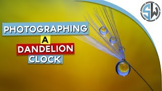Photographing a dandelion clock