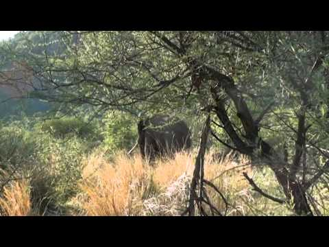 Motsomi Safaris South Africa Rifle Hunting Elephant Johnny