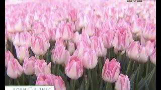 Цветочный бизнес