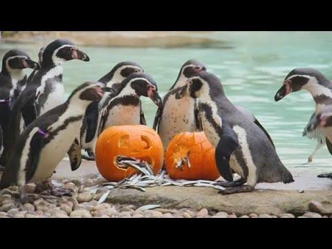 Schattig: dieren klaar voor Halloween