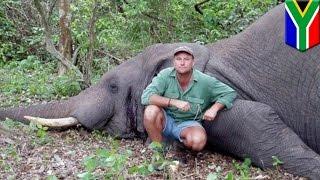 Video Pemburu tewas tertiban gajah yang ia buru - Tomonews download MP3, 3GP, MP4, WEBM, AVI, FLV Juli 2018