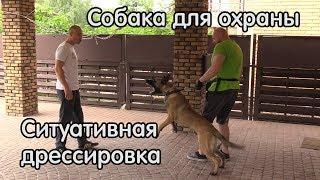 Собака для охраны, ситуативная дрессировка, малинуа Ганс