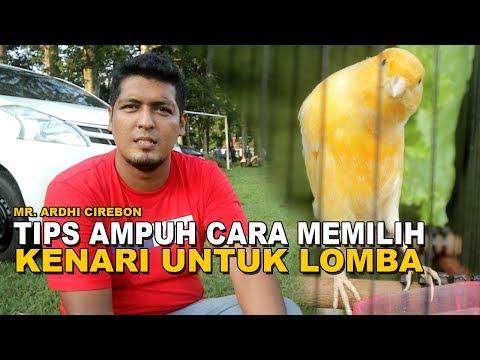 Begini Tips Ampuh Memilih Kenari Untuk Lomba Ala Mr. Ardhi Cirebon