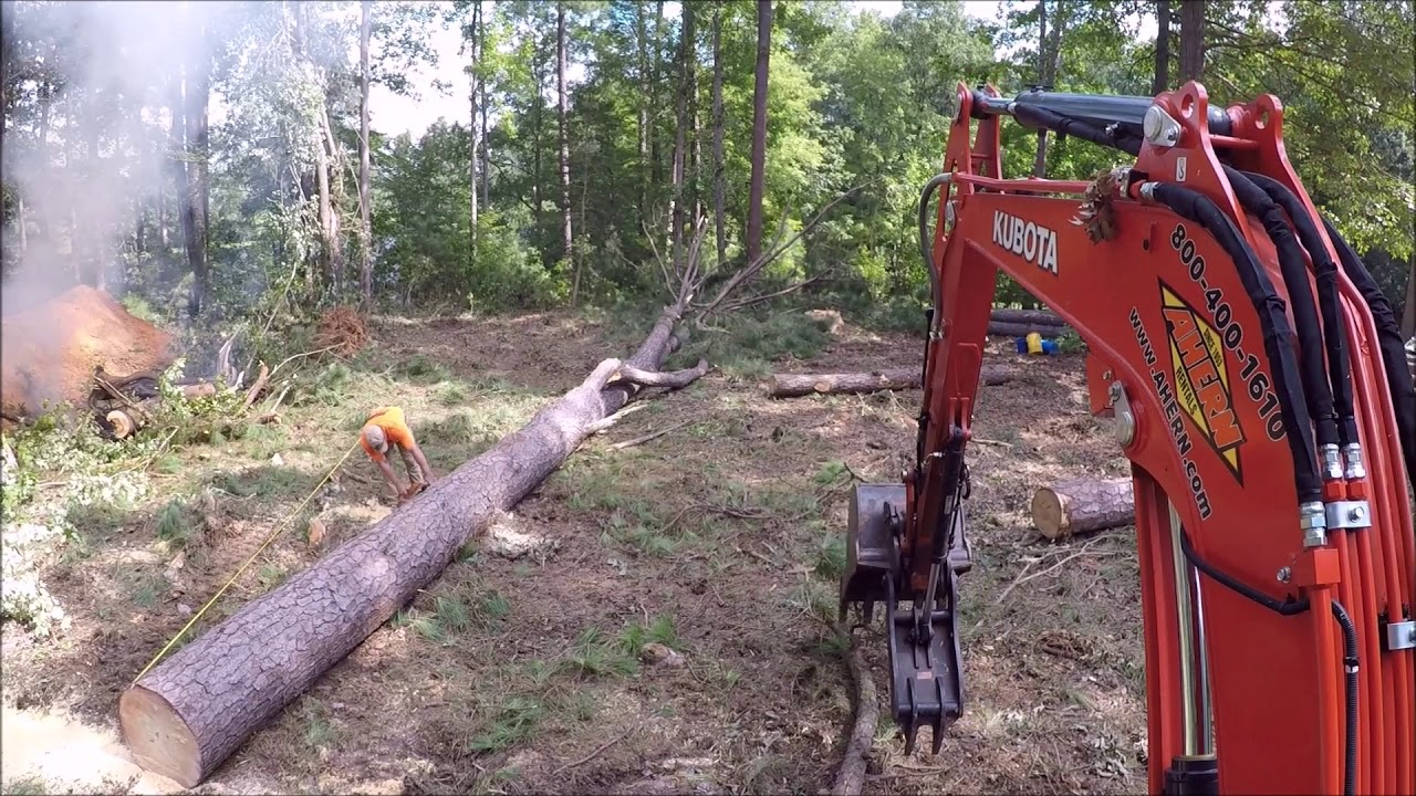 taking-down-some-big-trees