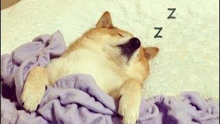 sleepy-boi