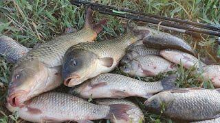 Рыбалка на САЗАНА ловля на донку и фидер а также СТЕРЛЯДЬ сомики и жирные караси