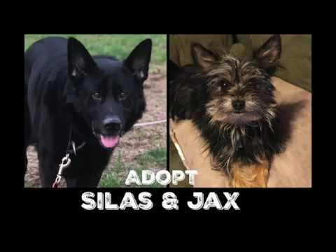 passion-4-paws:-adopt-silas-&-jax!