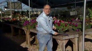Gardening calendar helps gardeners plan a productive year