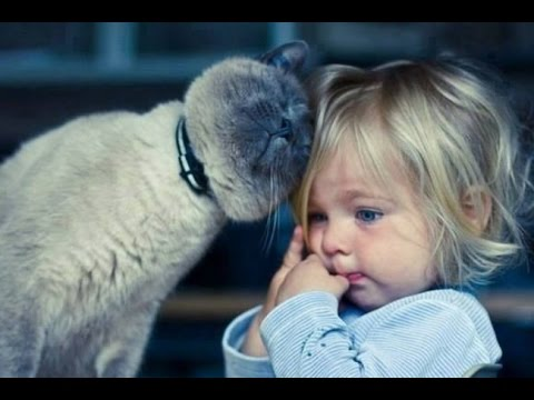 Cats Are The Best Babysitters  Compilation 2015 || AHF [HD]