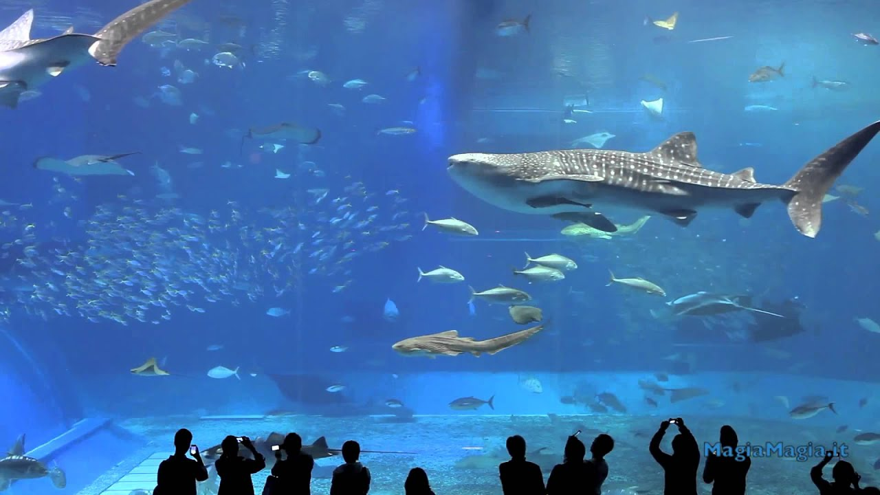 2 hrs aquarium relax music youtube for Spacearium aquariums