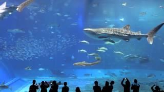 2 Hrs Aquarium relax music