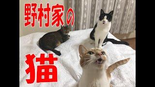 SKE48の「レッツ STAY HOME」 / 野村実代 野村家の猫を紹介します(テレビ愛知・SKE48共同企画)