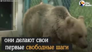 Лев и Медведь, спасенные из зоопарка #спасениеживотных