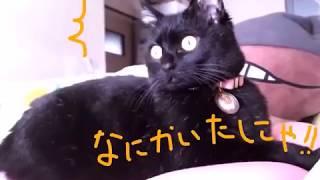 はな動画part2 thumbnail