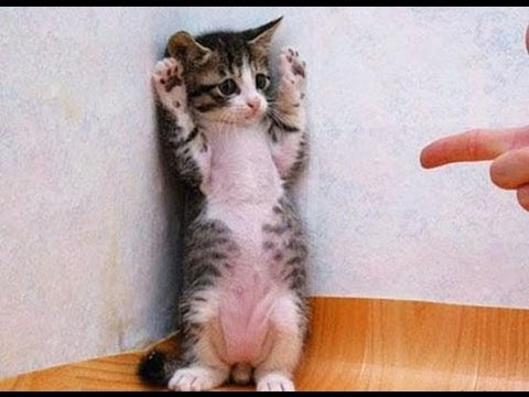 Image of: Views Funny Cats Video Funny Cat Videos Ever Funny Videos Funny Animals Funny Animal Videos Youtube Funny Cats Video Funny Cat Videos Ever Funny Videos Funny