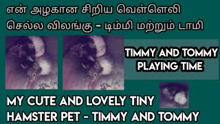 Timmy and Tommy playing video | hamster | playing with roller circle | pet animal | ishu RJ petcare