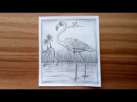 how-to-draw-scenery-of-flamingo-bird-with-pencil-sketch.-step-by-step(easy-draw)
