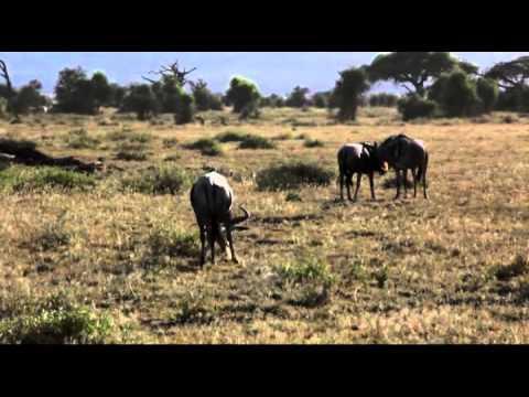 Национальный парк Амбоссели в Кении