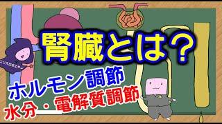【管理栄養士国家試験】 腎臓 についての解説講座