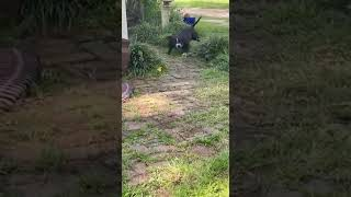 real fight dog and python
