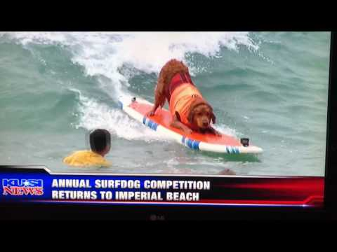 Imperial Beach Surf Dog Competition 2017
