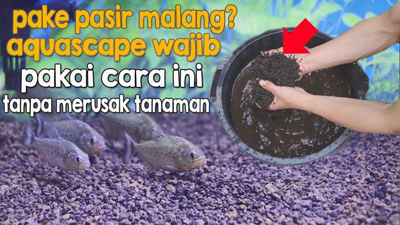Cara Menaruh Pasir Malang Di Aquarium Dan Aquascape Agar Tanaman Tidak Rusak Youtube Pasir malang untuk akuarium