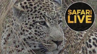 safariLIVE - Sunrise Safari - June 26, 2018 thumbnail