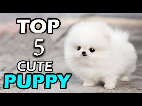 ✅ये हैं दुनियां के सबसे क्यूट कुत्ते  Cutest Dog Breed In The world