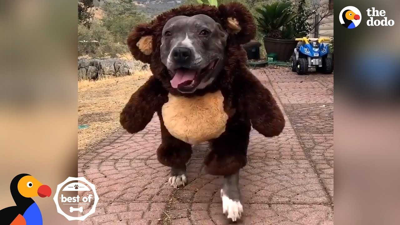 Animals All Dressed Up For Halloween