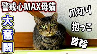 警戒心MAX母猫の爪切り・首輪・抱っこで大奮闘!!!