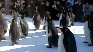 ペンギンのお散歩!快調に始まりましたぁ。(^-^)