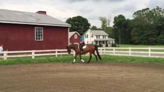 Quiet Safe Talented horse for sale