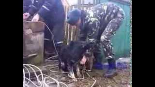 Люди приходят на помощь животным..