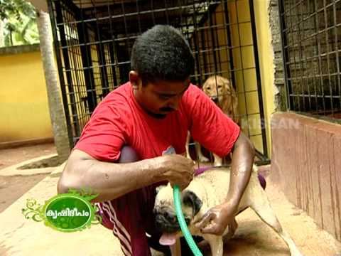 Success story of dog keeping as a business enterprise of a young man.
