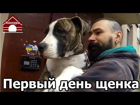 Вопрос: Владельцы собак, сколько плакал ваш щенок в первые дни в новом доме?